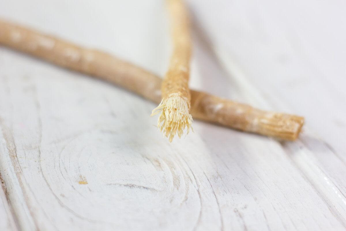 Kaue auf einem Miswak-Zweig