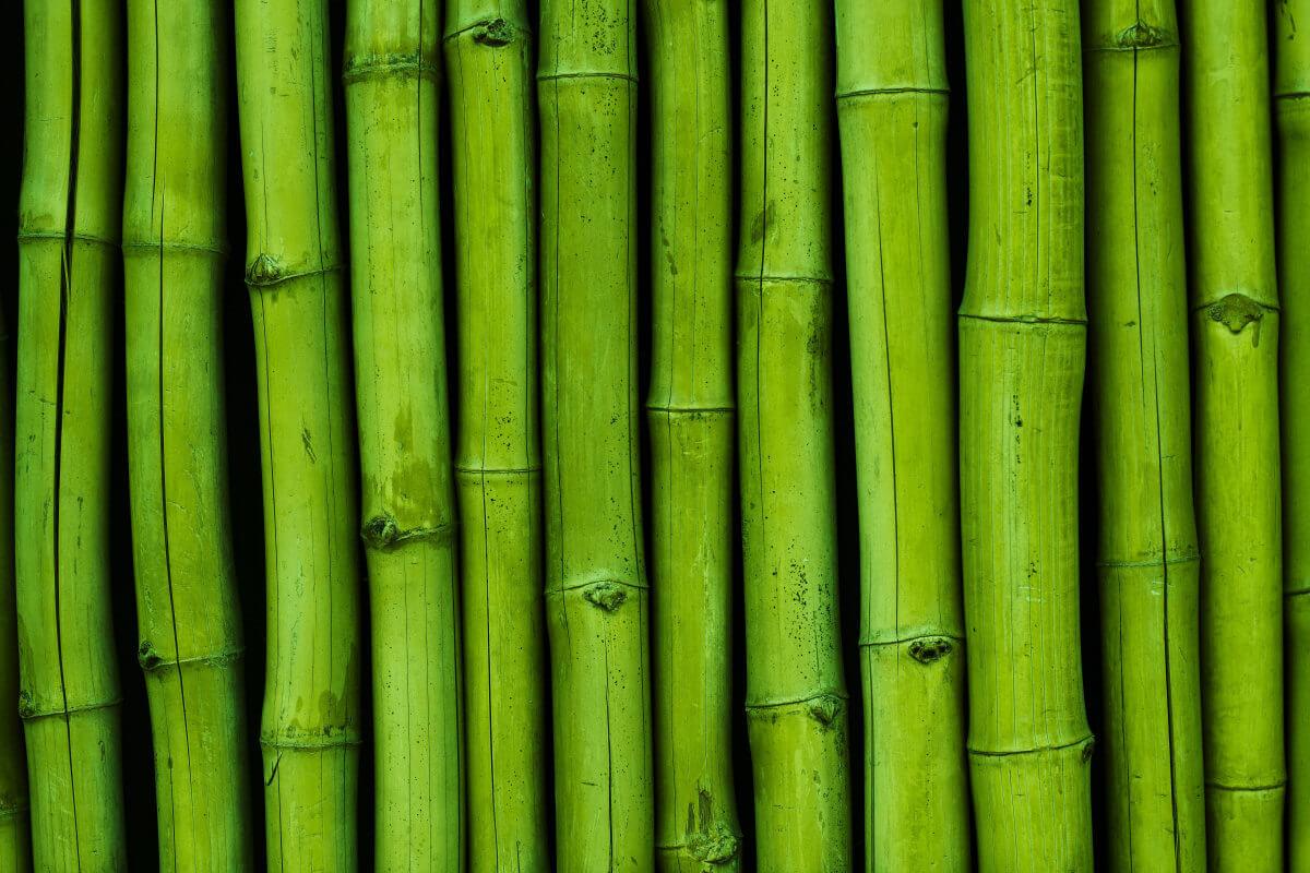 Wie nachhaltig ist Bambus als Rohstoff